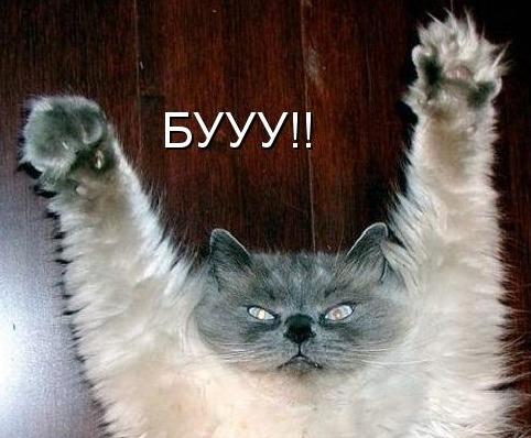 chto-takoe-google-page-speed-i-kak-s-etim-rabotat-spookie-cat